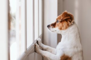 We can't always watch our pets, so smart home devices are great for keeping them safe at home.